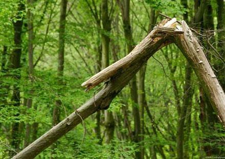 broken-tree-646x433