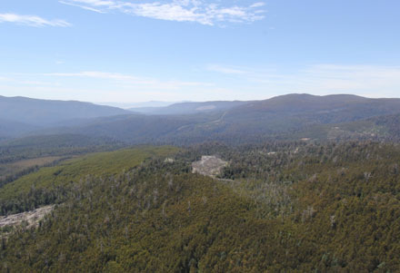 tas-forest