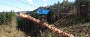 ffc-falcon-forestry-claw