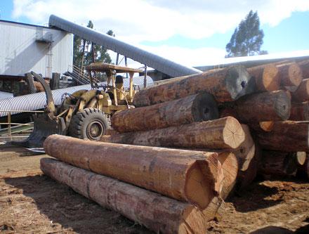 Timberbiz » Australia increasing log exports