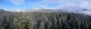 oregon uni forestry